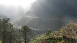 Reben bei Sao Vicente