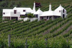 Te Mata Vinyard, Hawkes Bay NZ <br>foto:PhilipC/flickr