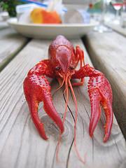 roter Lobster Hummer