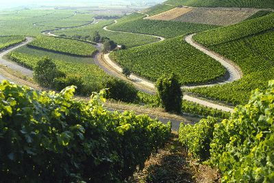 Blick ins Weinparadies bei Iphofen